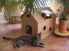 Katzenhaus aus Wellpappe für Innen